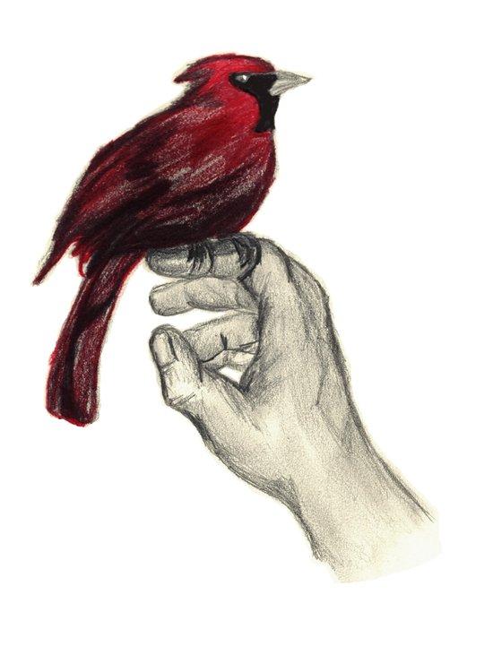 Cardinal Focus Art Print