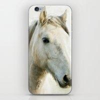 White Horse Portrait iPhone & iPod Skin