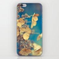 Daylight Dreams iPhone & iPod Skin