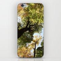 Fall Canopy - Woodland T… iPhone & iPod Skin