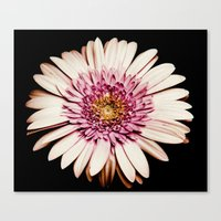 FLOWERS V Canvas Print