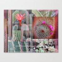 Flowering Cactuses  Canvas Print