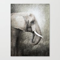The Old Elephant Canvas Print