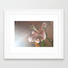 lilium Framed Art Print