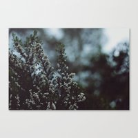 like winter Canvas Print
