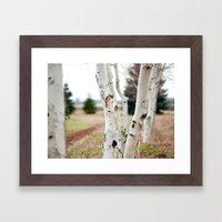 Line of Birches Framed Art Print