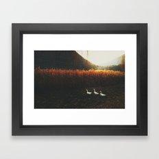 Walking geese Framed Art Print