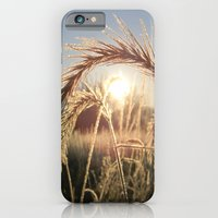 iPhone & iPod Case featuring Wheat Sunrise by a.rose