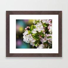 Gorgeous Apple Blossoms Framed Art Print