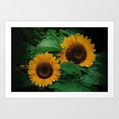 Sonnen Blumen  Art Print