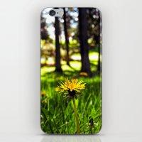 Park dandelion iPhone & iPod Skin