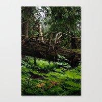 When A Tree Falls.. Canvas Print