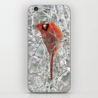 Winter Charmer iPhone & iPod Skin