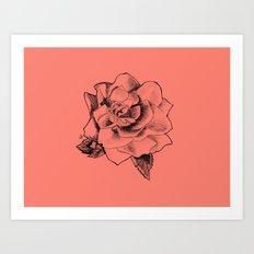 Rose on Rose Art Print
