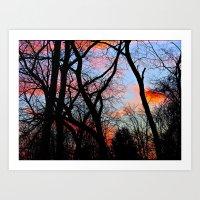 Sunset Through the Tangled Trees Art Print