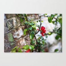 Wee Red Flowers Canvas Print