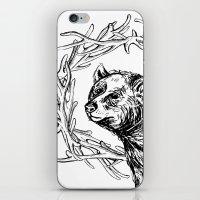 Bear Queen iPhone & iPod Skin