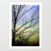 Riverbirch Art Print