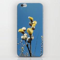 Weidenkätzchen iPhone & iPod Skin
