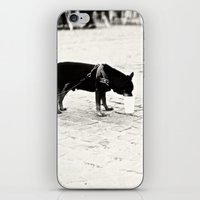 Dog On The Street iPhone & iPod Skin