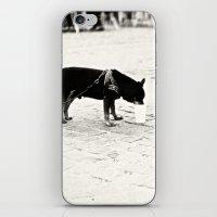 Dog on the street iPhone & iPod Skin