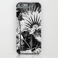 Desert Daisies (bnw) - Daisy Project in memory of Mackenzie iPhone 6 Slim Case