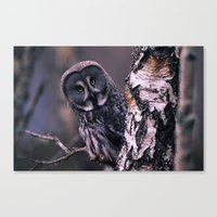 INQUISITIVE GREAT GREY OWL Canvas Print
