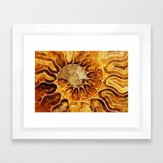 AMAZING AMMONITE Framed Art Print