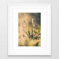 Shining Snowdrop Framed Art Print