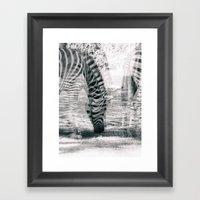 Zebre na trati. Framed Art Print