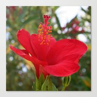 Soft Red Hibiscus With Natural Garden Background Canvas Print