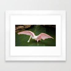 Pink Spoonbill Crane Framed Art Print