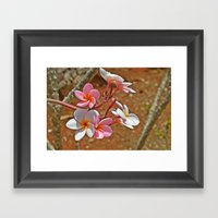 Plumaria Framed Art Print