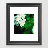 Oak leaf hydrangea flower Framed Art Print