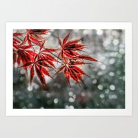 Japanese Red Maple Leave… Art Print