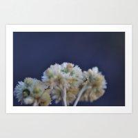 Fluffy Flower Art Print