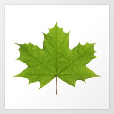 Green Maple Leaf Art Print