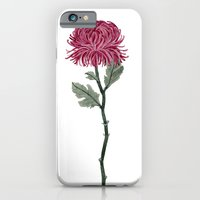 Pink Chrysanthemum iPhone 6 Slim Case