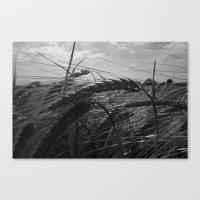 Summer Fields #1 Canvas Print