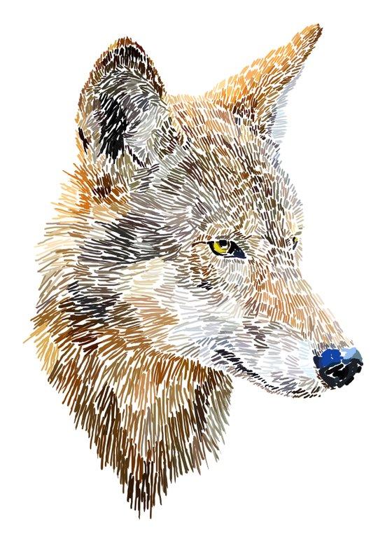Wolf Head 2 Art Print