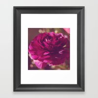Crimson Rose Framed Art Print
