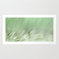 Grasses In The Morning  Art Print