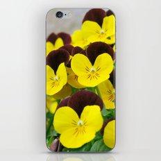Pansy iPhone & iPod Skin