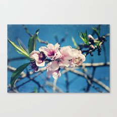Nectarine Blossoms Canvas Print