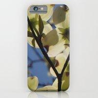 Dogwood Days of Spring iPhone 6 Slim Case