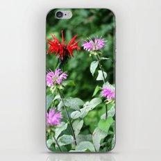 Bee Balm iPhone & iPod Skin