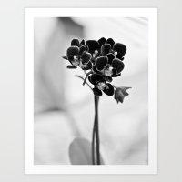 Vegetal Portrait II: Black Orchid Art Print