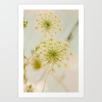 Summer Botanical Vintage Queen Anne's Lace Art Print