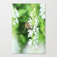 Climbing Bee Canvas Print