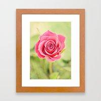 Pink Rose in Spring Framed Art Print